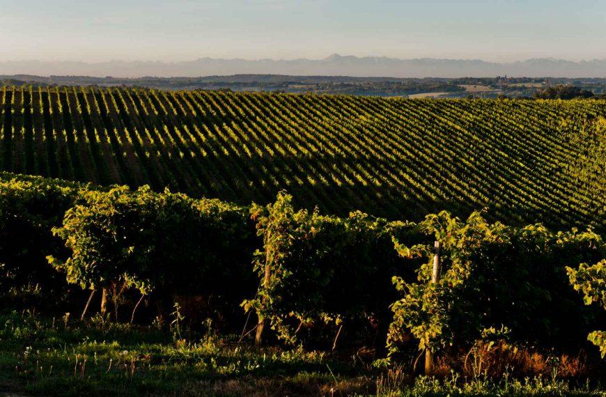 Entre vignes et vallées